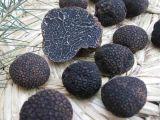 Tablettes nourrissantes de rein de truffe noire
