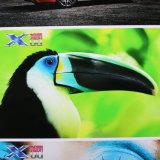 Roulis industriel de tête d'impression de Xuli Printer-2.5pl Xaar 1201 neufs pour rouler l'imprimante UV