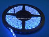 먼 관제사를 가진 Waterproofip65 12V/24V SMD5050 RGB LED 지구 빛