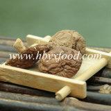 Fungo di Shiitake liscio asciugato