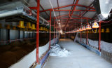 صنع وفقا لطلب الزّبون مزرعة بناء في دواجن منزل مع تجهيز محترفة آليّة