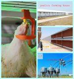 Equipamento da exploração avícola com projeto e construção em um batente
