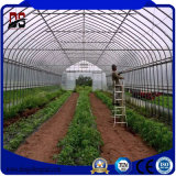 야채 설치를 위한 고품질 다중 경간 필름 덮개 온실