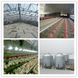 Casa prefabricada de la avicultura de la estructura de acero