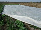 Le polypropylène Spunbond-Bond Nontissé couvercle de récolte