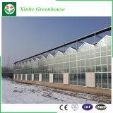 De goedkope Serre van het Glas van de Spanwijdte van Muti van de Prijs Landbouw