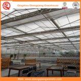 PC Blatt-/Glas-/Plastikfilm-Gewächshaus-Baumaterial für die Landwirtschaft/Werbung