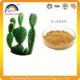 10: 1 порошок выдержки завода кактуса для Slimming