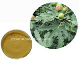 Flavoni di erbe di 10:1 della polvere del foglio di fico dell'estratto del foglio di fico