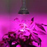 LED 플랜트 수경법 충분한 양 빛 야채는 백색 반점 램프를 증가한다