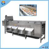 Auotmatic 분류 기계를 분류하는 주황색 석류 청과