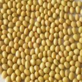 Isoflavones de soja BPF ISO
