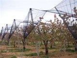 7X3mm 45G/M2りんごの木のあられの網