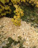 Burineur en bois de la conformité 9HP du ménage C E