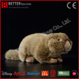 Het realistische Gevulde Dierlijke Stuk speelgoed van de Marmot van het Stuk speelgoed van de Pluche van de Marmot Levensechte Zachte