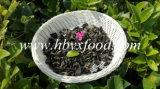 Natürliche Pflanzenhölzerner Ohr-Schwarz-Pilz ohne die Schädlingsbekämpfungsmittel Gemüse