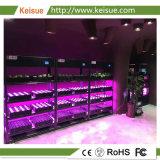 Keisue LED 빛 경작 및 Hydroponic 성장하고 있는 기계