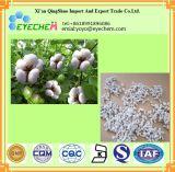 Precio más bajo de HPLC Extracto de semilla de algodón 98% de la rafinosa