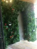 Qualitäts-künstliche Pflanzen und Blumen des vertikalen Gartens Gu-Mx2091321