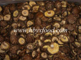شاي زهرة فطر ينشّف [متسوتك] فطر طعام طبيعيّ