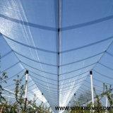 Anti rete di plastica della grandine, rete della protezione della grandine, reticolato della prova della grandine
