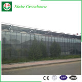 Invernadero agrícola del invernadero de cristal del precio de fabricante para la venta