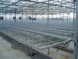 녹색 증가를 위한 폴리탄산염 장 온실
