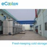 Armazenamento frio de baixa temperatura do volume do grande tamanho da alta qualidade grande para o armazenamento e o processamento de vegetais