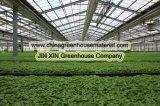 Invernadero de la PC para plantar