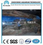 De acryl Materiële Bol van Vissen