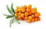 Богачи масла ягоды Seabuckthorn в Omega-7 для дополнения питания