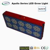 Los altos lúmenes 300W LED de Apolo 10 crecen ligeros para el invernadero