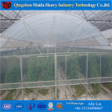 Serre de van uitstekende kwaliteit van het Glas van de multi-Spanwijdte met Hydroponic Systeem voor Angriculture