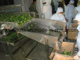 Linha de produção da congelação rápida dos bróculos/linha de processamento vegetal