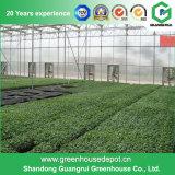 Estufa da folha do policarbonato da construção de aço da agricultura para o vegetal
