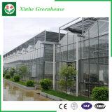 Serre chaude en verre pour la plantation végétale