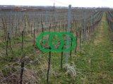 Poste de la cerca, carril, estaca de la uva