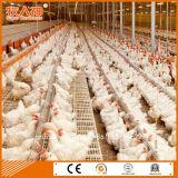 Strumentazione della tettoia del pollame di disegno di professione di prezzi più bassi per le azione del genitore