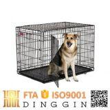 O zoneamento de malha de arame de Canis Cão