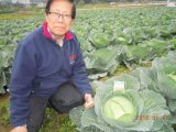 Unigrowの土のコンディショナーと葉状に野菜に植わること