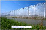 Коммерческие системы гидропоники пластиковую пленку зеленый дом для помидора
