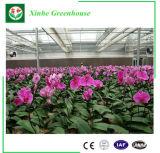 Chambre verte en aluminium du best-seller de la Chine pour le jardin de villa