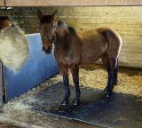 Esteiras de borracha de bloqueio da tenda, esteiras equestres e revestimento de borracha rolado, Matting do cavalo da vaca
