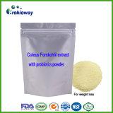 Lactobacilo del extracto de Forskohlii del coleo que adelgaza la cápsula de la pérdida de peso