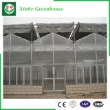 Casa verde dos sistemas hidropónicos da folha do PC para o tomate/cogumelo