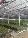 Serra di vetro d'acciaio galvanizzata della verdura della serra del TUFFO caldo