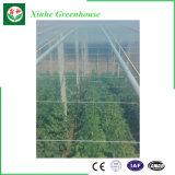 Парник тоннеля пленки PE пластичный высокий для цветков/овощей