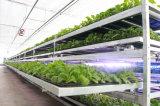 Подвижной Seedbed для аграрного парника