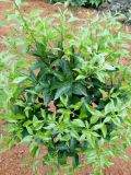 El acondicionador del suelo de Unigrow para cualquier fruta que planta, promueve calidad del suelo y de fruta