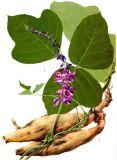 Puerarin: 40%, 60%, 80%, 98% CAS: 3681-99-0 Kudzu Wurzel Extrac